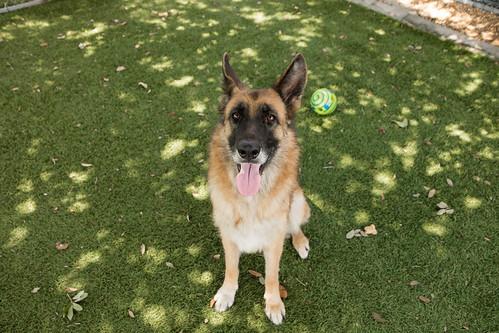 dog OCAS 072017 WD10 A383297-0006