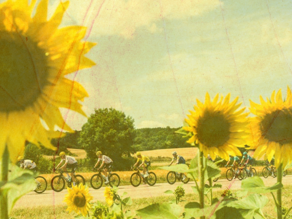 Wallpaper TDF 2017 Sunflowers