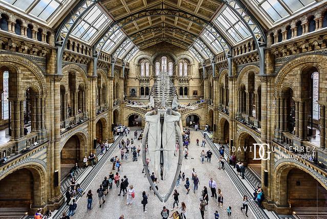 'Hope' Natural History Museum, London, UK