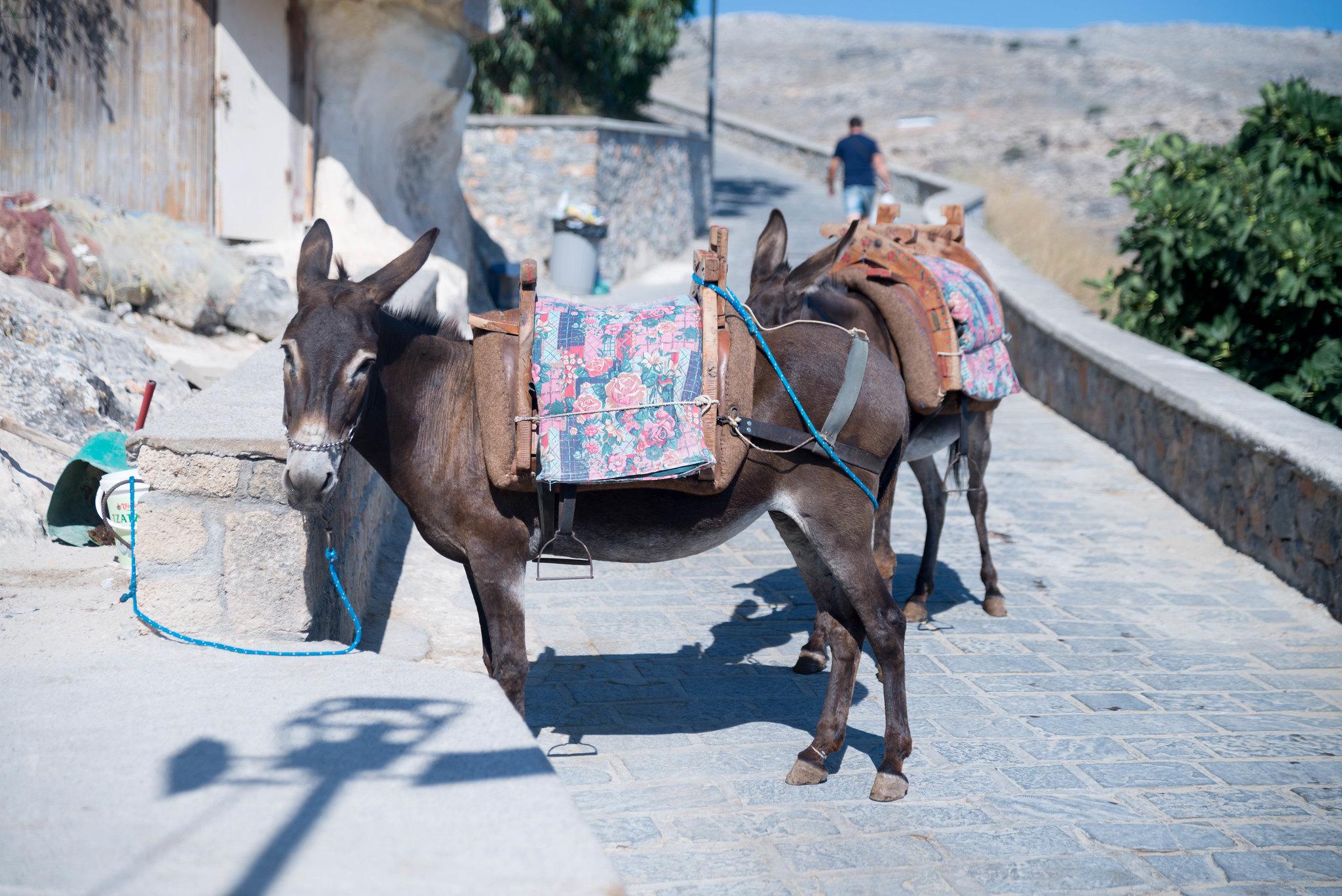 Lindos Rhodes donkey
