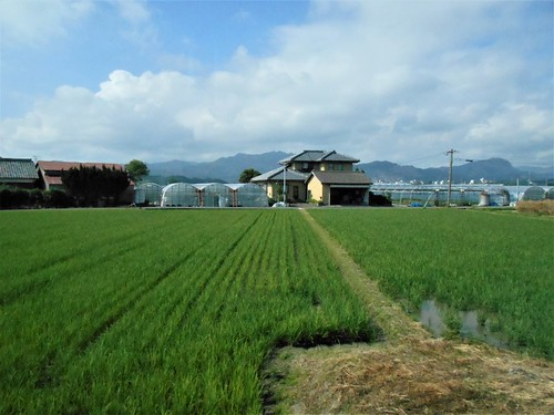 jp-Aoshima-Nobeoka (1)