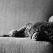 7-12-2017 Echo ~ Lazy Days by Jackie Petersen