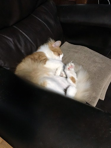 Winston loves a cozy corner.