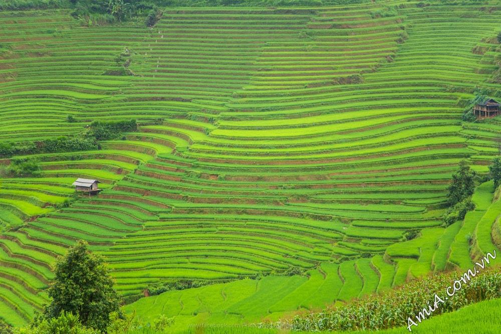 Phong canh dep Viet Nam lam hinh nen dien thoai may tinh dep