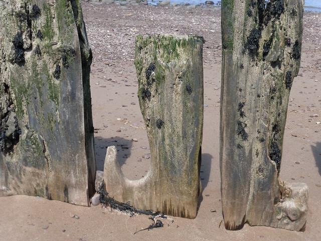 Groynes, Dunster Beach