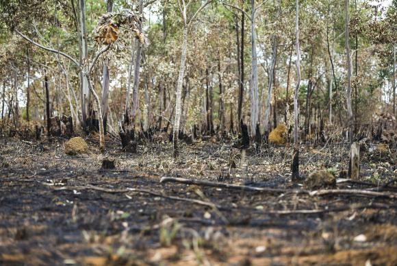 O ritmo de desmatamento do cerrado foi cinco vezes mais rápido que o medido na Amazônia - Créditos: Agência Brasil