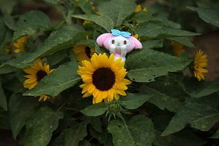 My Melody and Sunflower