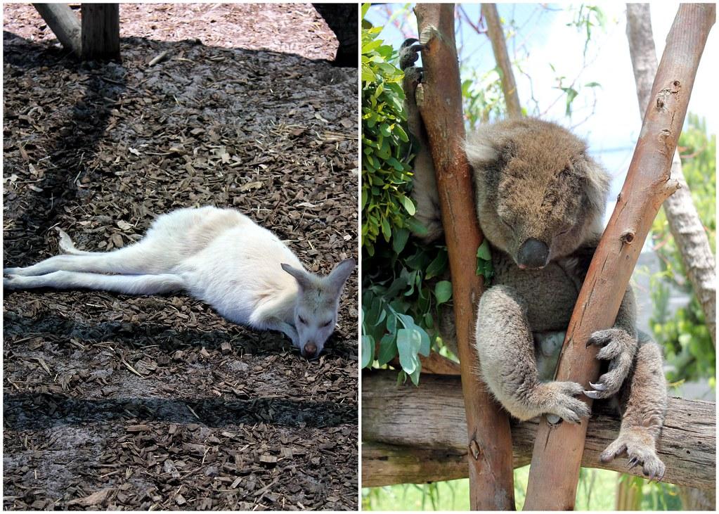 albany-discovery-bay-australian-wildlife-park