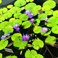 New York Botanical Garden XXIII