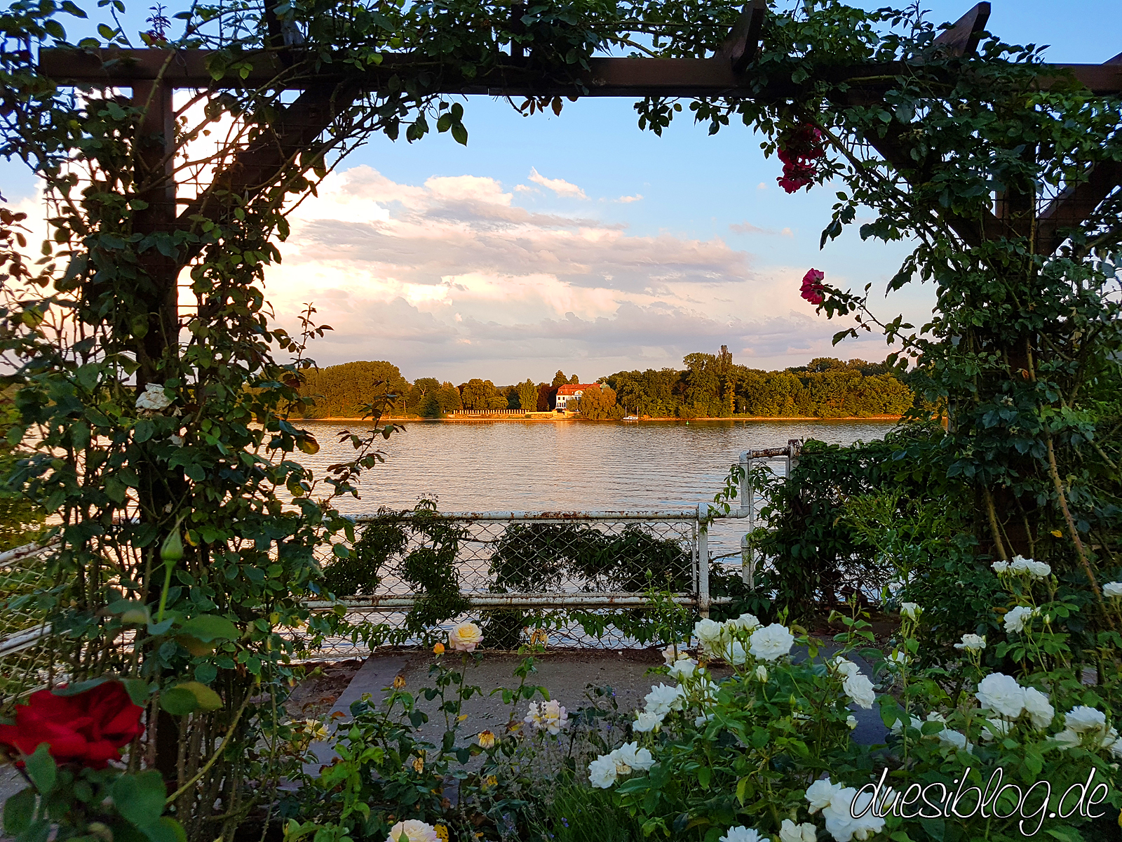 Eltville Rheingau Travelblog duesiblog 28