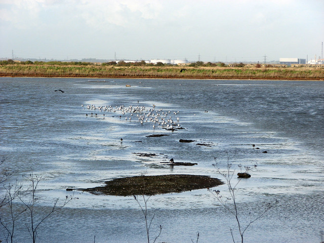 Cliffe Pools Nature Reserve