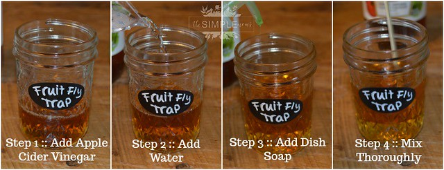 DIY Fruit Fly Trap in 4 Easy Steps on The SIMPLE Moms