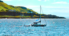 Scotland West Highlands Argyll a yacht called Eilidh of Cumbrae passing the lighthouse on the island of Little Cumbrae 16 July 2017 by Anne MacKay