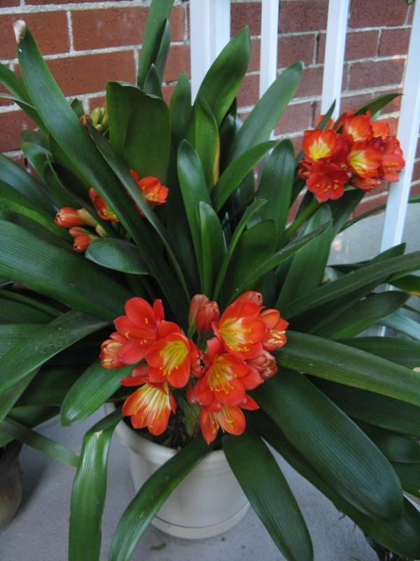 Autres plantes chez Cloo 35710068592_4214dda24d_o