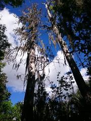 Fakahatchee State Preserve