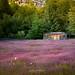 Cabaña abandonada - Valle Los Leones (Patagonia - Chile) by Noelegroj (8 Million views+!)