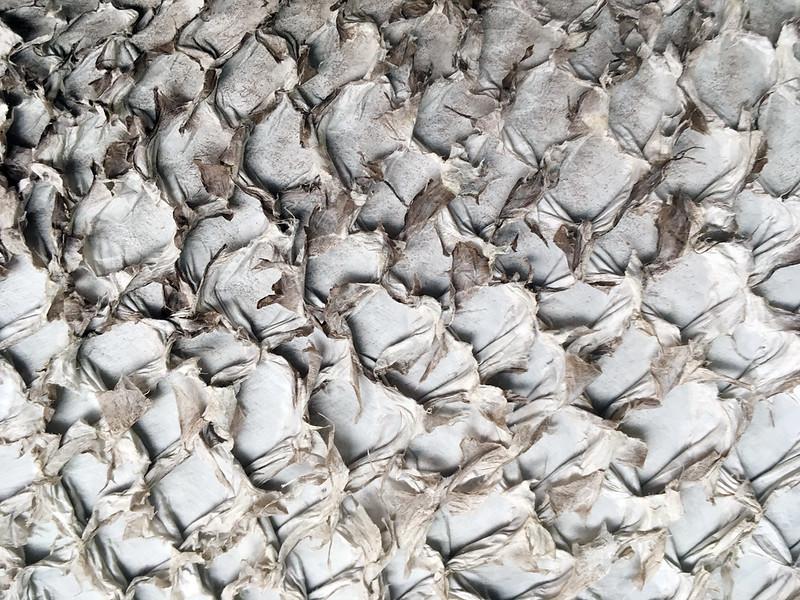 Western Australia - Esperance - fish-skin