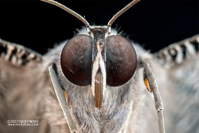 Moth - DSC_7139