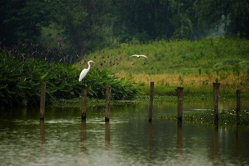 Birds in Xixi Wetland. From Visiting Marco Polo's Favorite City in China