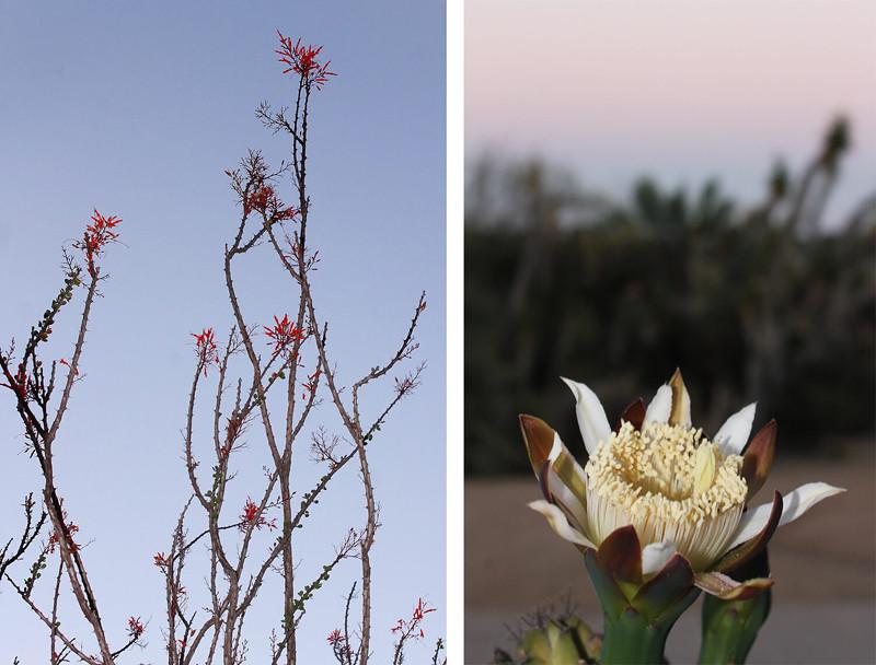 Balboa Desert & Rose Garden