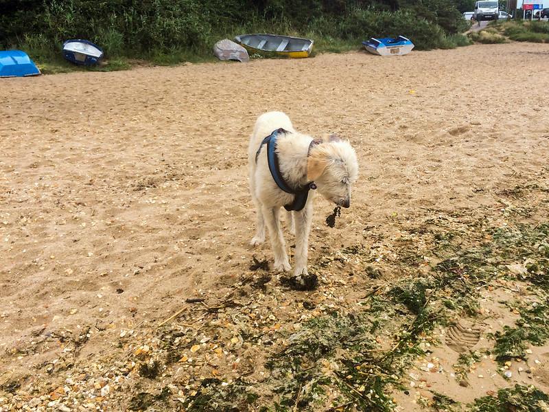 Teddy finds seaweed quite tasty