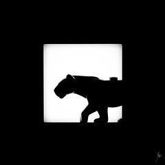 Shadow (383/100) - Panther