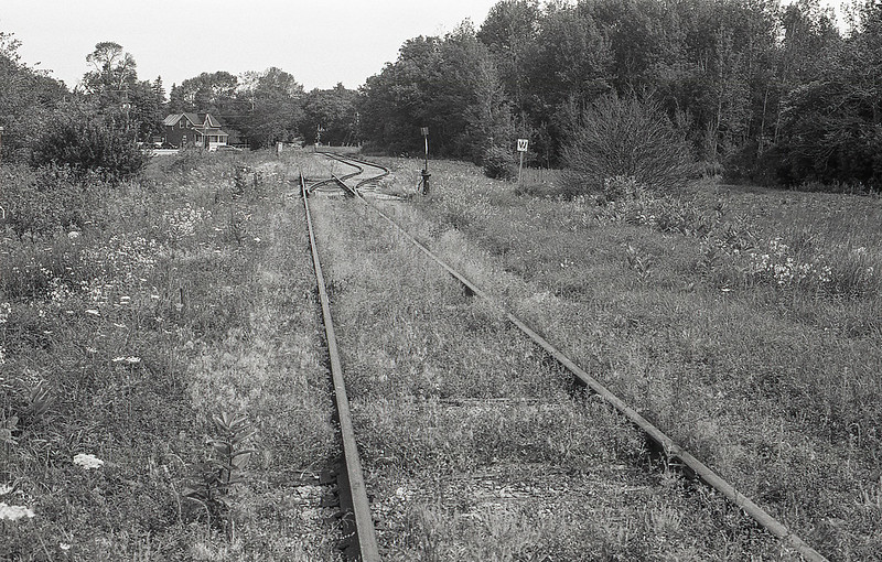 Overgrown Rail Line_
