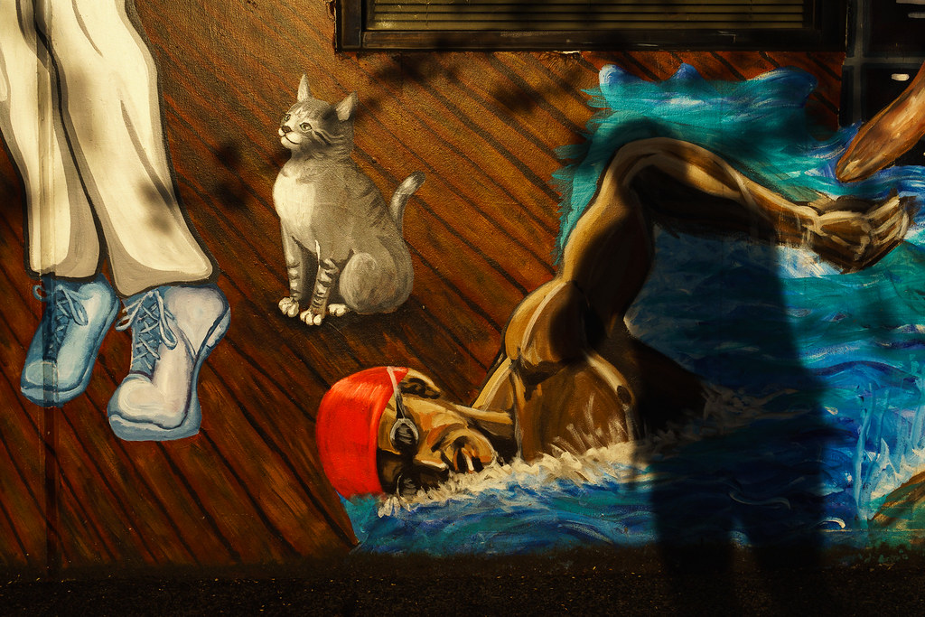 Swim Past the Cat