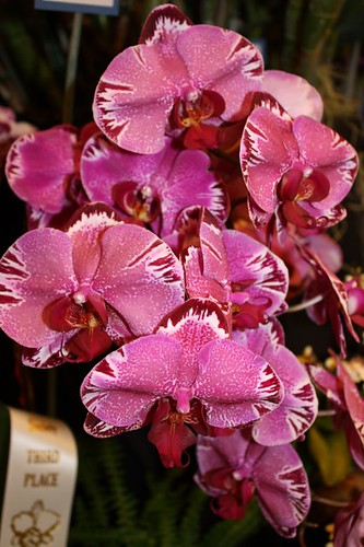 phal_interesting_pattern2