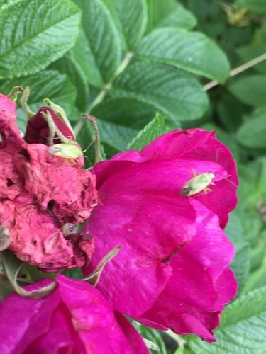 Hochbetrieb auf der Blume