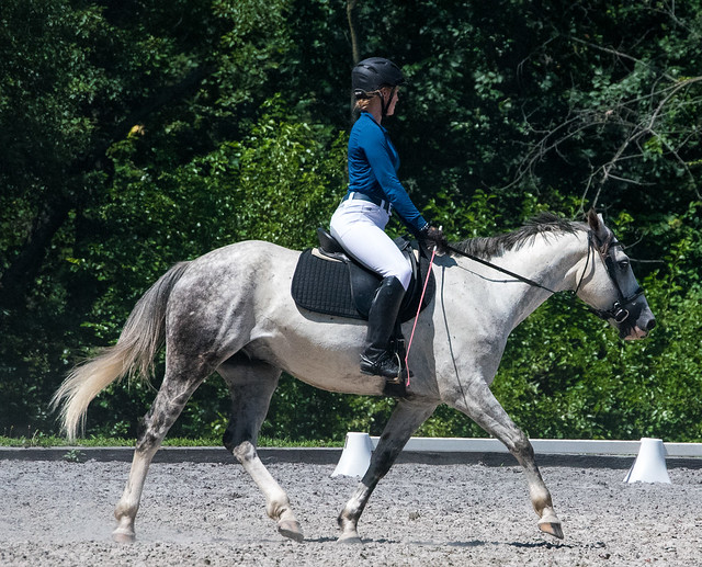 20170709 Grif Dressage Tests-34