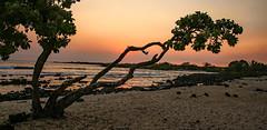 Angular Sunset