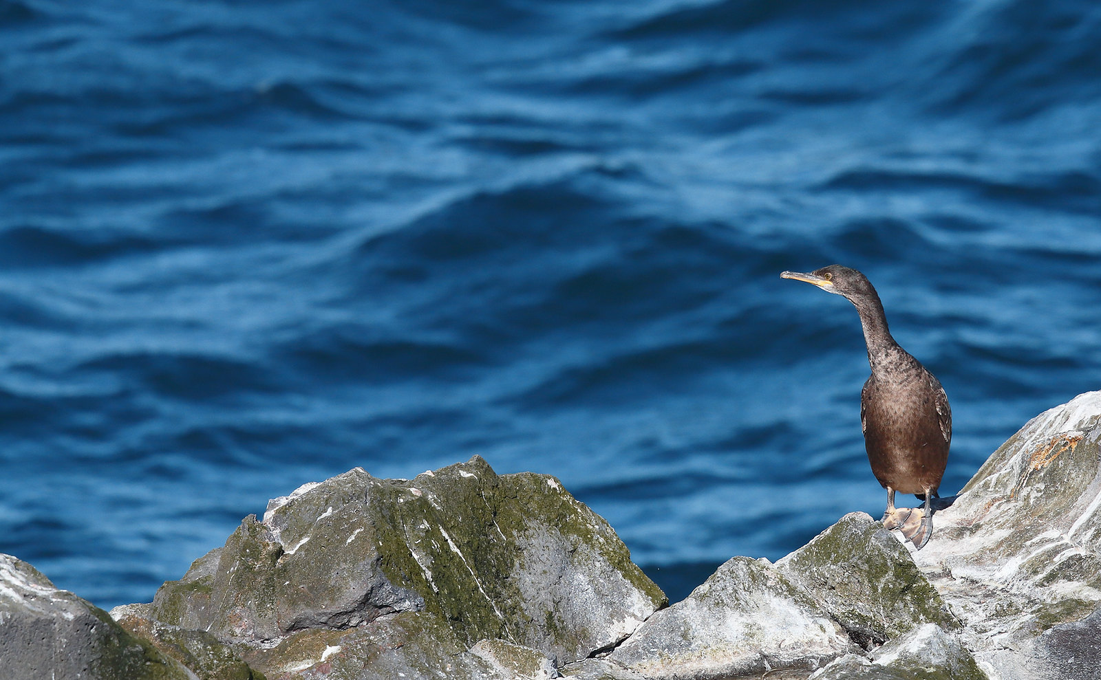 Another Shag on another rock