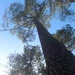 Photos des lecteurs | Le ciel a porté du pin - Gîtes de France avre de Patz