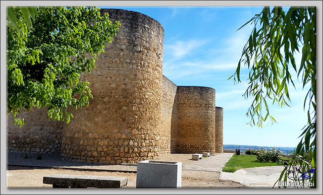 Museo del Vino Pagos del Rey y visita a Toro (13)
