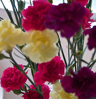 carnations 20150527