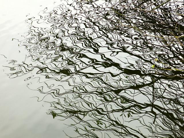 twigs and twirls, Canon POWERSHOT G15