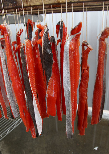 Red salmon that has been stripped, brined and tied hangs ready to go into the smoker.
