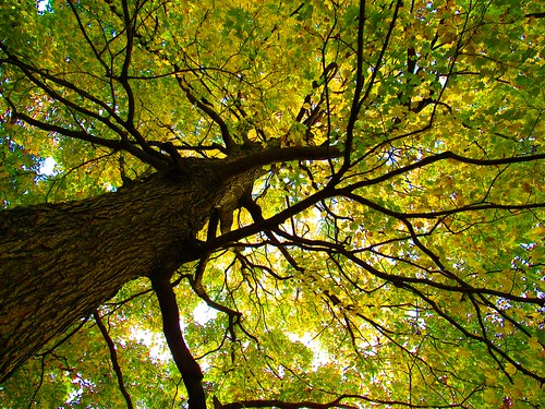 looking up at the trees. Photographer Joann Kraft