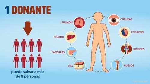 donacion-organos-infografia