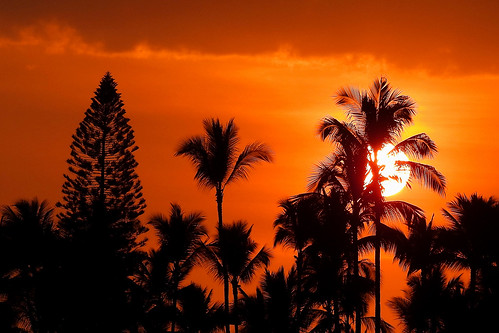 bigisland hawaii usa outdoor coast seaside kailuakona travel waterfront vulcanicisland tropical tropicalisland sunset nightshot eveninglight sky nightsky clouds black red palmtrees palmtreesilhouettes