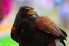 Eagle Eye !! by Sreejith S.