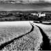 Raglan Castle before the harvest