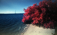 FPP Color Infrared