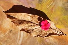 flower on leaf