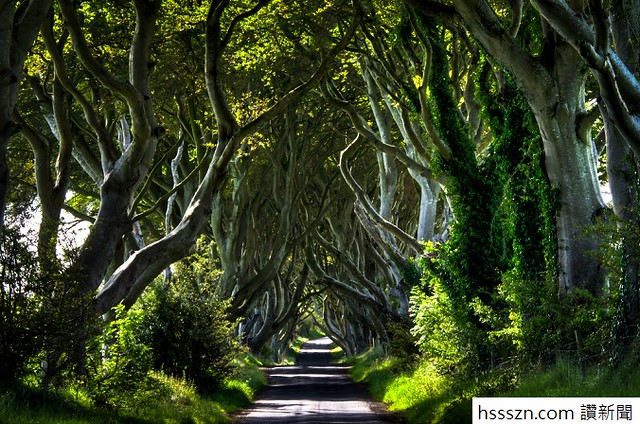 Day 205 : The Dark Hedges