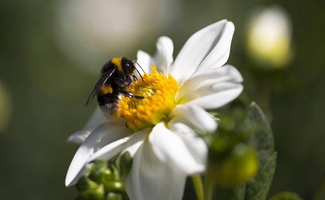 polline, polline!!