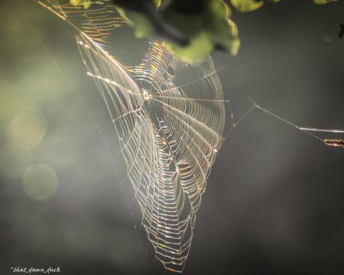 nature spiderweb web dawn sunlight