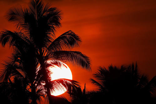 bigisland hawaii usa outdoor coast seaside kailuakona travel waterfront vulcanicisland tropical tropicalisland sunset nightshot eveninglight sky nightsky clouds black red palmtrees palmtreesilhouettes wiflevel01