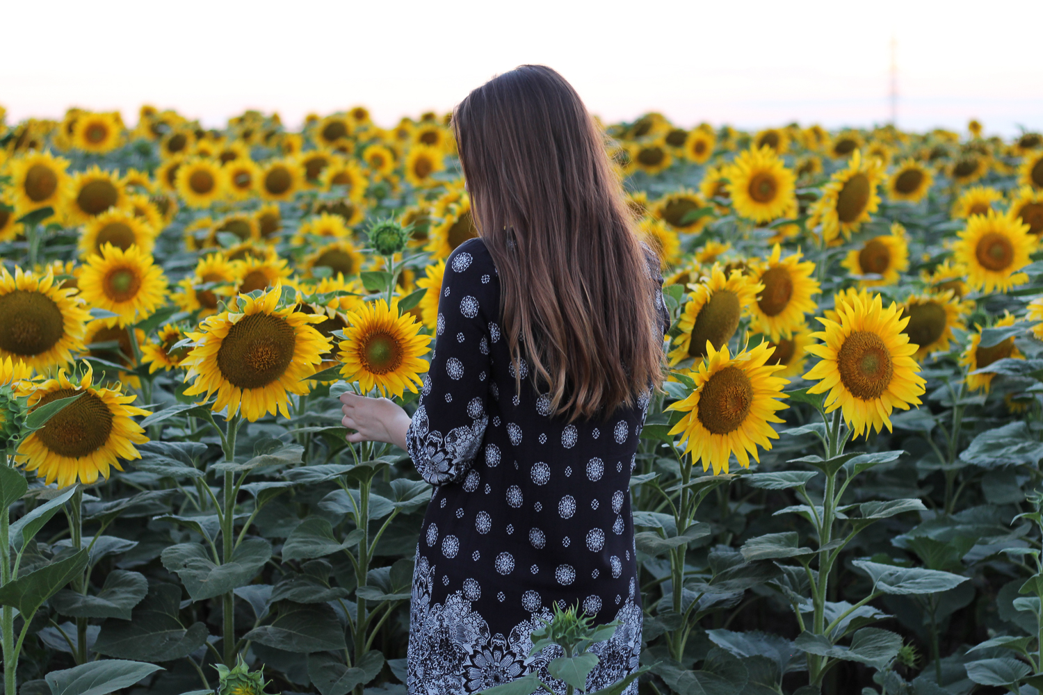 Sunflower Rosegal Dress